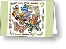 Butterflies Moths Caterpillars Greeting Card
