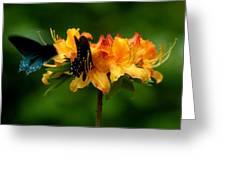 Butterflies On Yellow Azalea Greeting Card