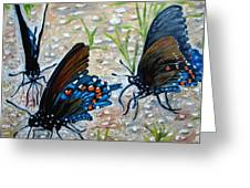 Butterflies Original Oil Painting Greeting Card by Natalja Picugina