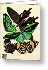Butterflies, Plate-1 Greeting Card