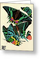 Butterflies, Plate-7 Greeting Card