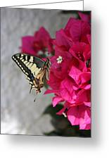 Butterfly 01 Greeting Card