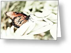 Butterfly 05 Greeting Card