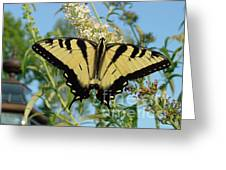 Butterfly 133 Greeting Card