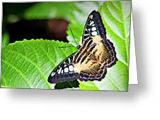 Butterfly 13a Greeting Card