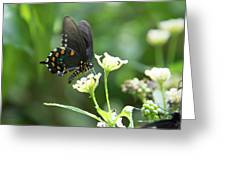 Butterfly 140 Greeting Card