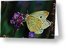 Butterfly 18718 Greeting Card