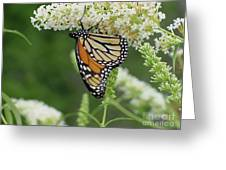 Butterfly 188 Greeting Card