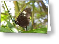 Butterfly-2 Greeting Card