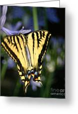 Butterfly - 2 Greeting Card