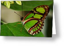Butterfly 2 Greeting Card by Scott Gould