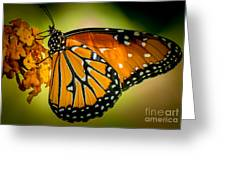 Butterfly 29 Greeting Card