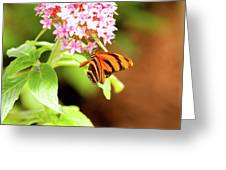 Butterfly-4 Greeting Card