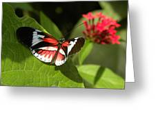 Butterfly-5 Greeting Card