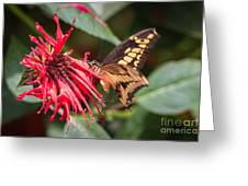 Butterfly 5 Greeting Card
