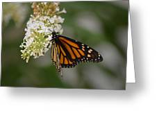 Butterfly #6 Greeting Card