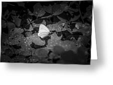 Butterfly 8 Greeting Card