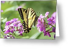 Butterfly #9 Greeting Card