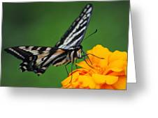 Butterfly Afternoon Greeting Card