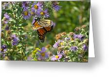 Butterfly And Blue Greeting Card