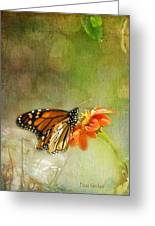 Butterfly And Bokeh Greeting Card