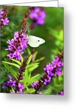 Butterfly And Bouquet Greeting Card