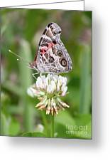 Butterfly And Bugs On Clover Greeting Card