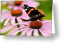 Butterfly And Cone Flowers Greeting Card