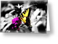 Butterfly And Lilac Greeting Card