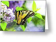 Butterfly And Lilacs Greeting Card
