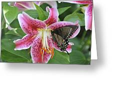 Butterfly And Lilly Greeting Card