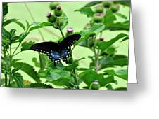Butterfly And Mossy Pond Greeting Card