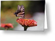 Butterfly And Orange Zinnia Greeting Card