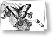 Butterfly And Orchids Greeting Card