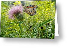 Butterfly And Pink Wildflower Greeting Card