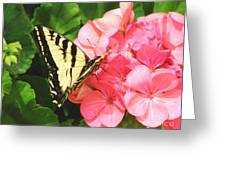 Butterfly And The Geranium Greeting Card