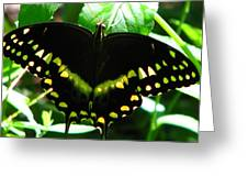 Butterfly Art 3 Greeting Card