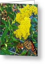 Butterfly At Cape May Nj Greeting Card