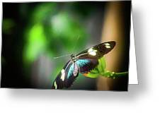 Butterfly At Cleveland Botanical Gardens Greeting Card
