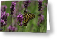 Butterfly Balancing Act Greeting Card