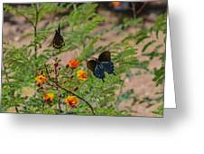 Butterfly Ballet Greeting Card