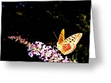 Butterfly Banquet 1 Greeting Card