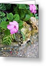 Butterfly Banquet Greeting Card