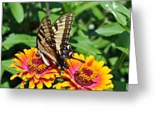 Butterfly Beauty II Greeting Card