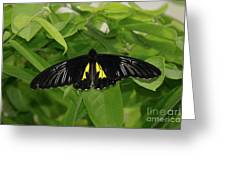 Butterfly Black And Yellow Greeting Card