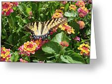 Butterfly Blend Greeting Card