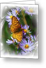 Butterfly Bliss Greeting Card