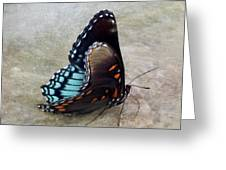 Butterfly Blue On Groovy 2 Greeting Card