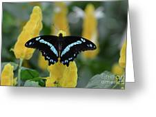 Butterfly Blue Striped Greeting Card