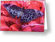 Butterfly Blues - Constable  Greeting Card